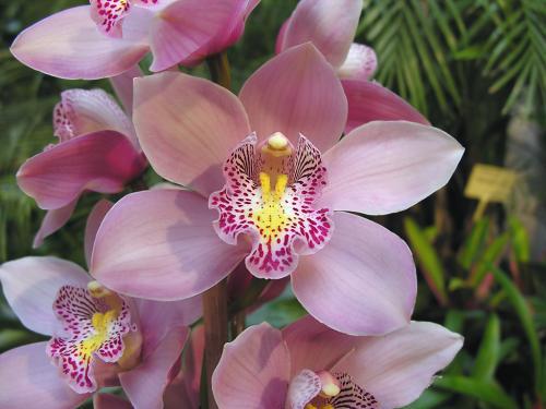 Alla scoperta delle orchidee al parco di roccamonfina for Costo orchidea