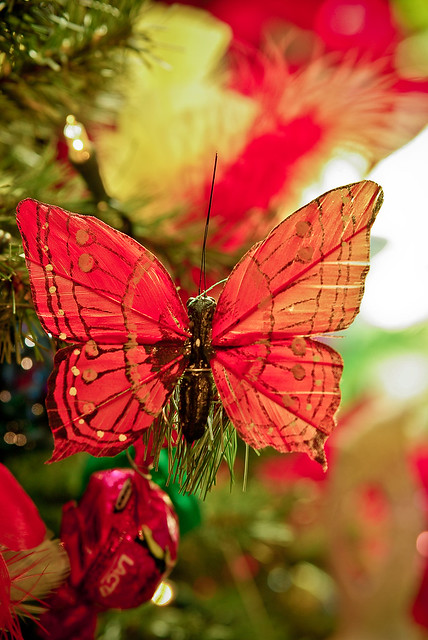 Christmas Butterfly Flickr Photo Sharing