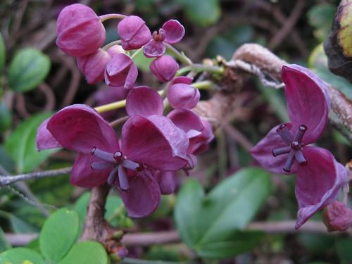 divine blossom