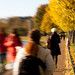 Autumn by oalsaker