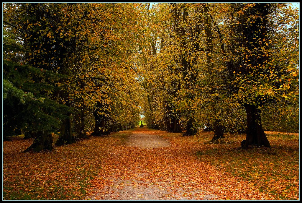 An afternoon walk in the fall - Castle Howard, North Yorkshire, UK