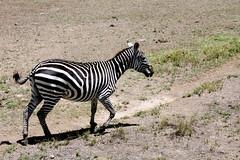 Lake Nakuru National Park, October 2009