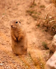 Imagery Meditation for Stress Relief Cute Animals