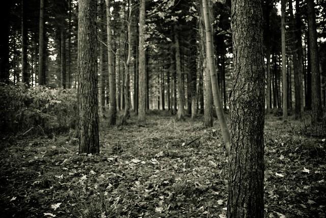 Castleroe forest