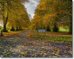 Fancy an Autumn Stroll?