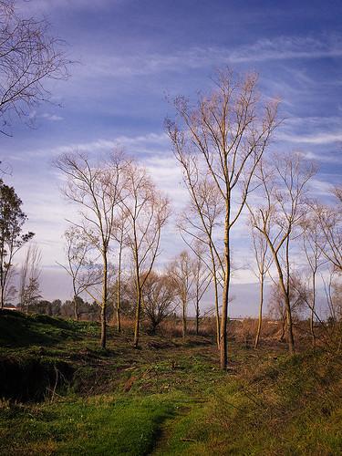 blue trees winter sky españa plants naturaleza color colour verde green nature azul clouds canon landscape spain espanha plantas arboles paisaje cielo nubes invierno ecología espagne extremadura coleur ecoloxia romerodecastilla