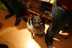 animal(1.0), dog(1.0), pet(1.0), mammal(1.0), police dog(1.0),