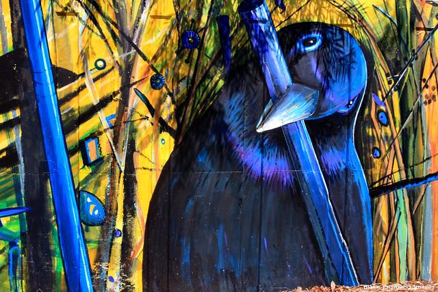 Ptilonorhynchus violaceus - Male Satin Bowerbird (Treasures of the Tweed Mural Project)