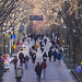 Locust Walk, University of Pennsylvania