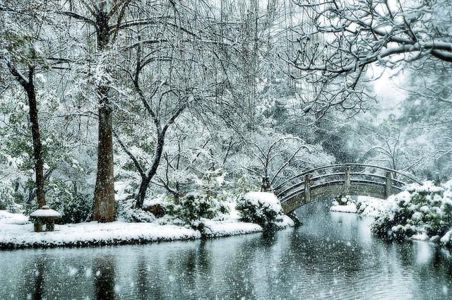 Snow Japanese Garden Fort Worth Texas Snowfall Winter Storm Pond Koi Lake Trees Flakes Tea House