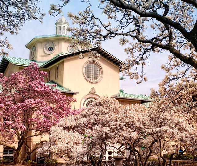 Magnolia Terrace in March. Photo by Antonio M. Rosario.