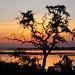Chobe National Park with mum