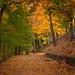 Cynwyd path by m greenbaum photography