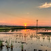 Small photo of Sunset over the paddy fields of Alappuzha