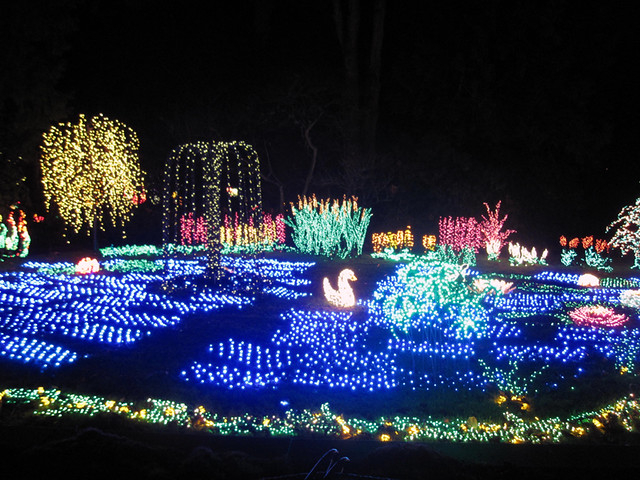 Garden d 39 lights swan lake flickr photo sharing for Bellevue botanical garden lights