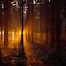 Sunset Trees by mattneighbour