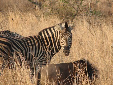 Safari Pictures 045
