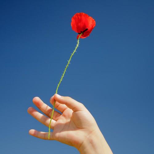Una mano sujeta una flor en Primavera