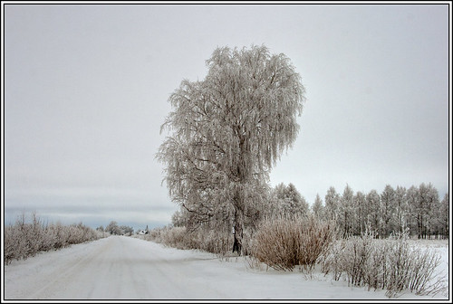 road winter sky cloud white snow tree ice clouds canon season landscape geotagged frost bluesky latvia frosting winterwonderland lettland latvija aigarsr geo:lat=57206408 geo:lon=21673665