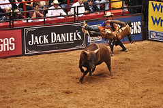 animal sports, rodeo, cattle-like mammal, bull, event, tradition, sports, matador, performance, bullfighting, bull riding,