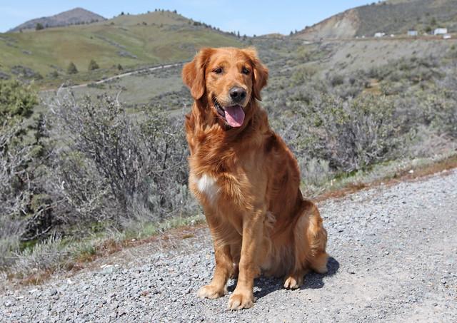Image Result For Oregon Dog Training