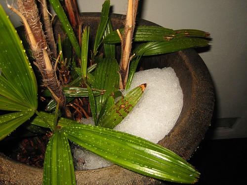 hail, palm IMG_1925