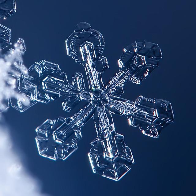 Snowflake. Detail.