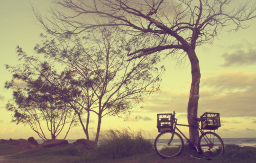 bicycle canon eos 350d gold evening coast searchthebest walk reverie theworldwelivein tallebudgera
