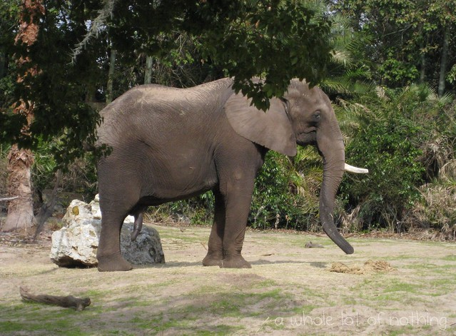 Nature Disney Elephant Charactersbabies Cat Soft Toy