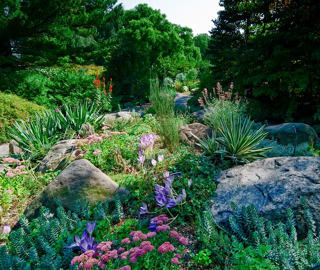 The Rock Garden in September. Photo by Antonio M. Rosario.