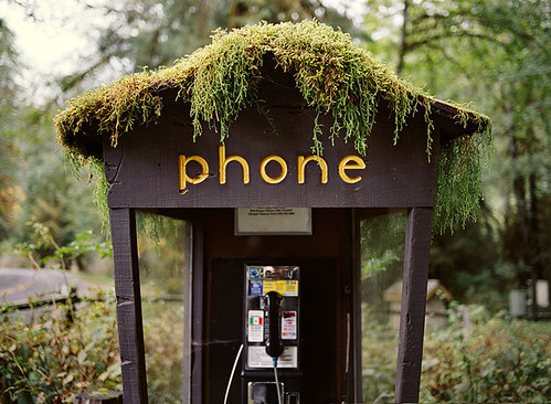 Hoh_Rainforest_phonebooth