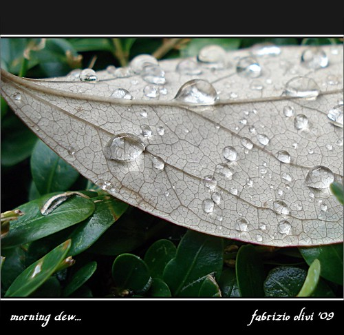 morning dew... by Fabrizio Olivi