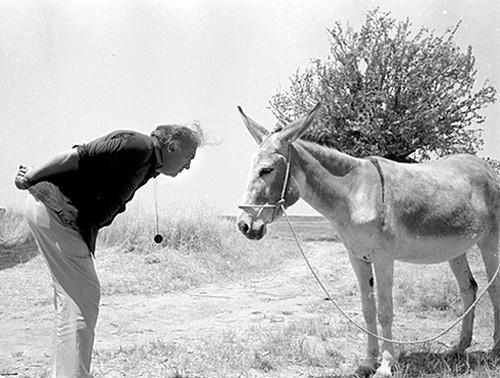 Fellini & Donkey