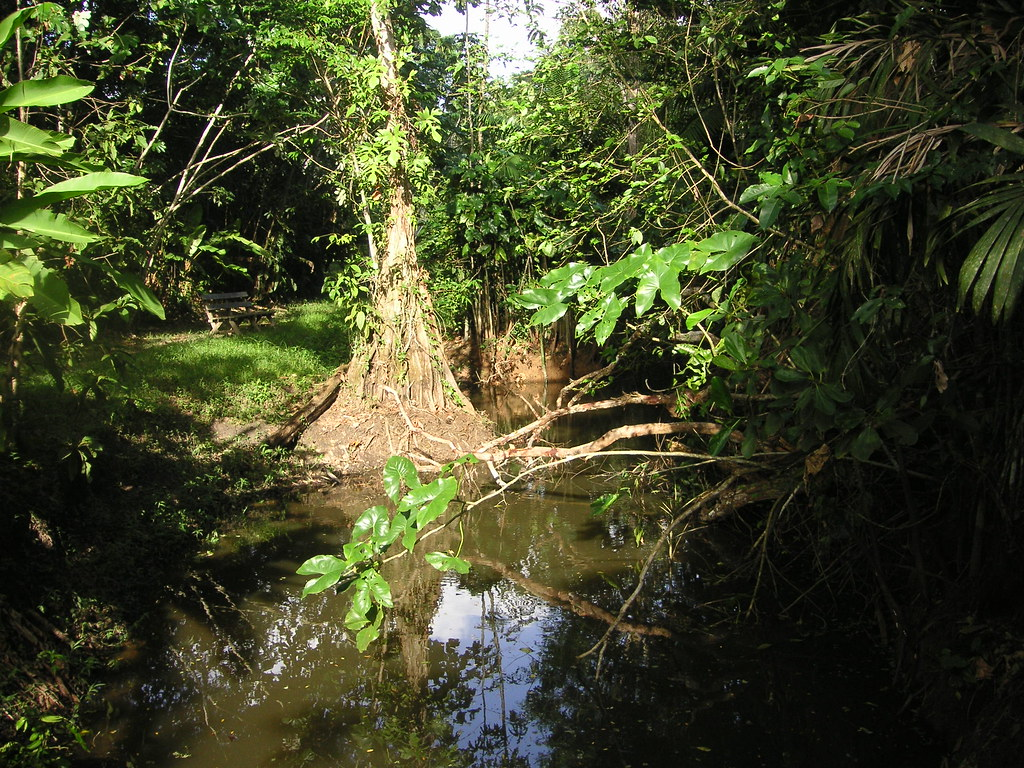 Een Stukje Tropisch Regenwoud Bartwatching Flickr