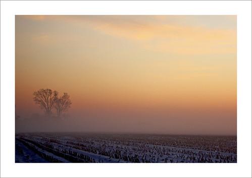 sunset mist cold holland tree rural zonsondergang 5 boom brabant witer soulscapes dinteloord brrrrrrrrrrrrrrrrrrr 102010rural