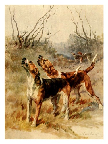 011-Foxhaunds-The power of the dog 1910- Maud Earl