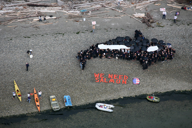 "Aerial photo of Orca Human Mural from ""Fight to Save Puget Sound"""