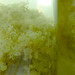 kefir cordial foraging debrasolomon elderflower vlierbloesem siroop culiblog fizzybubblech
