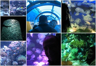 Aquariums in Ocean Park