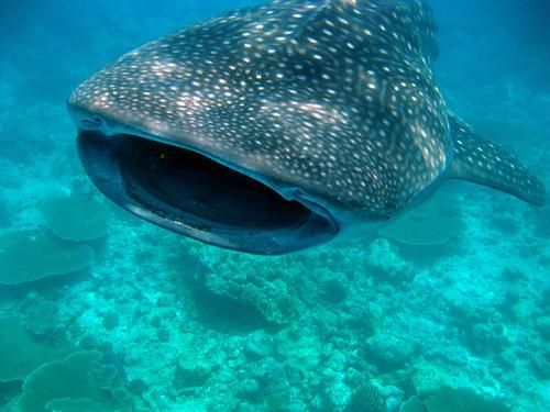 Diving Maldives, 2009