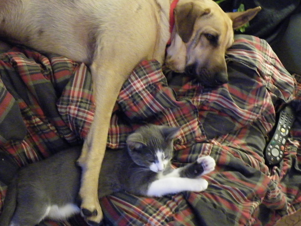Dogs and cats living together mass hysteria