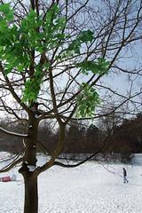 Winterspaziergang Hasenheide