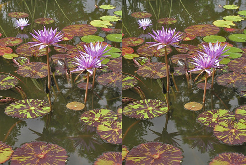 stereophotography 3d parallelview
