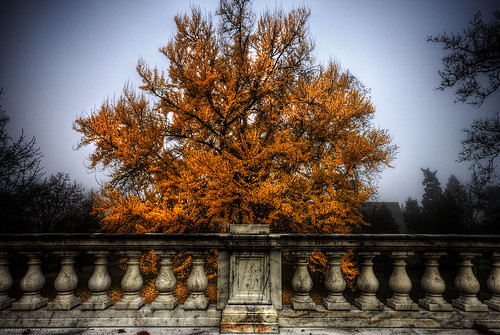 color tree fall virginia university explore hero winner charlottesville rotunda uva thechallengefactory