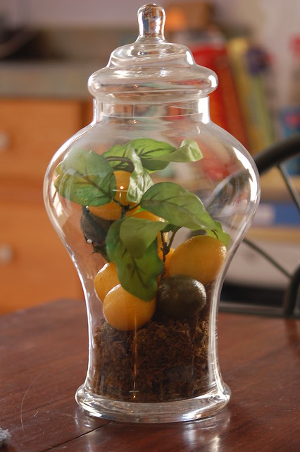 Future live terrarium (Credit: wideeyedwonders on Flickr.com)