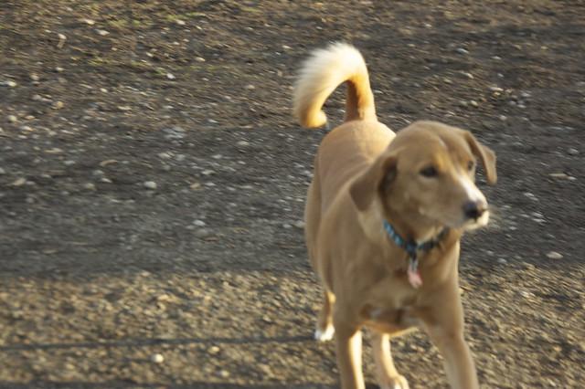 Everett Dog Park