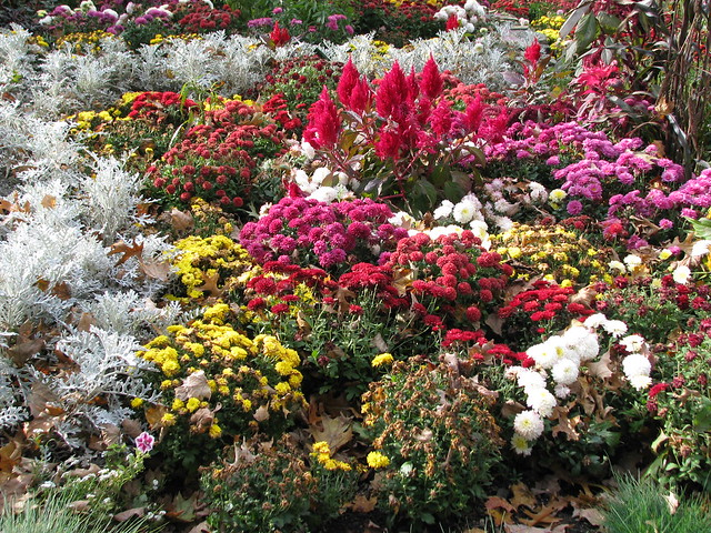 late autumn flower garden flickr photo sharing