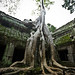 The Biggest Tree at Angkor Thom by ber360