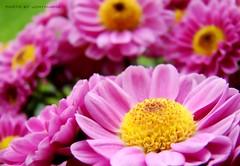 FLORES CARAMELIZADAS ( FLOWERS WITH CARAMEL)