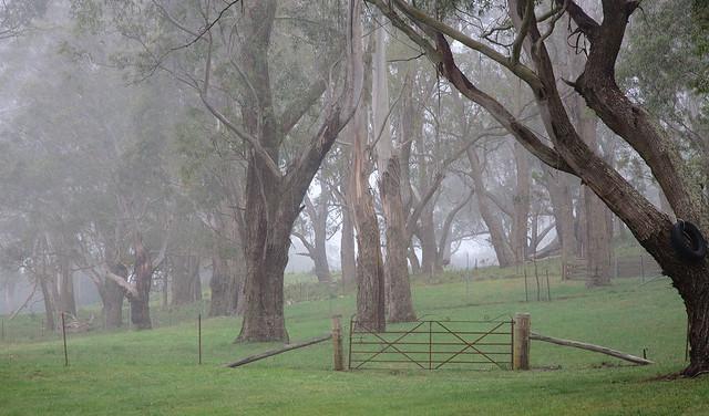 Greenbrier Park Vinyards (1)